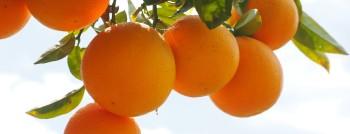 oranges-1117498_1920.jpg