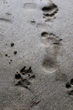 footprint-2166848_1920.jpg